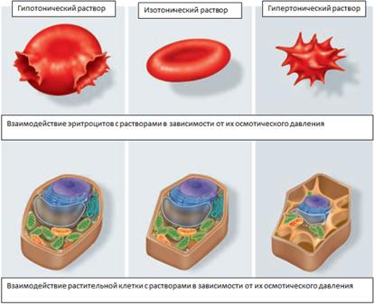 Давление на клетки