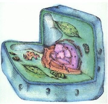 Клетка растительная