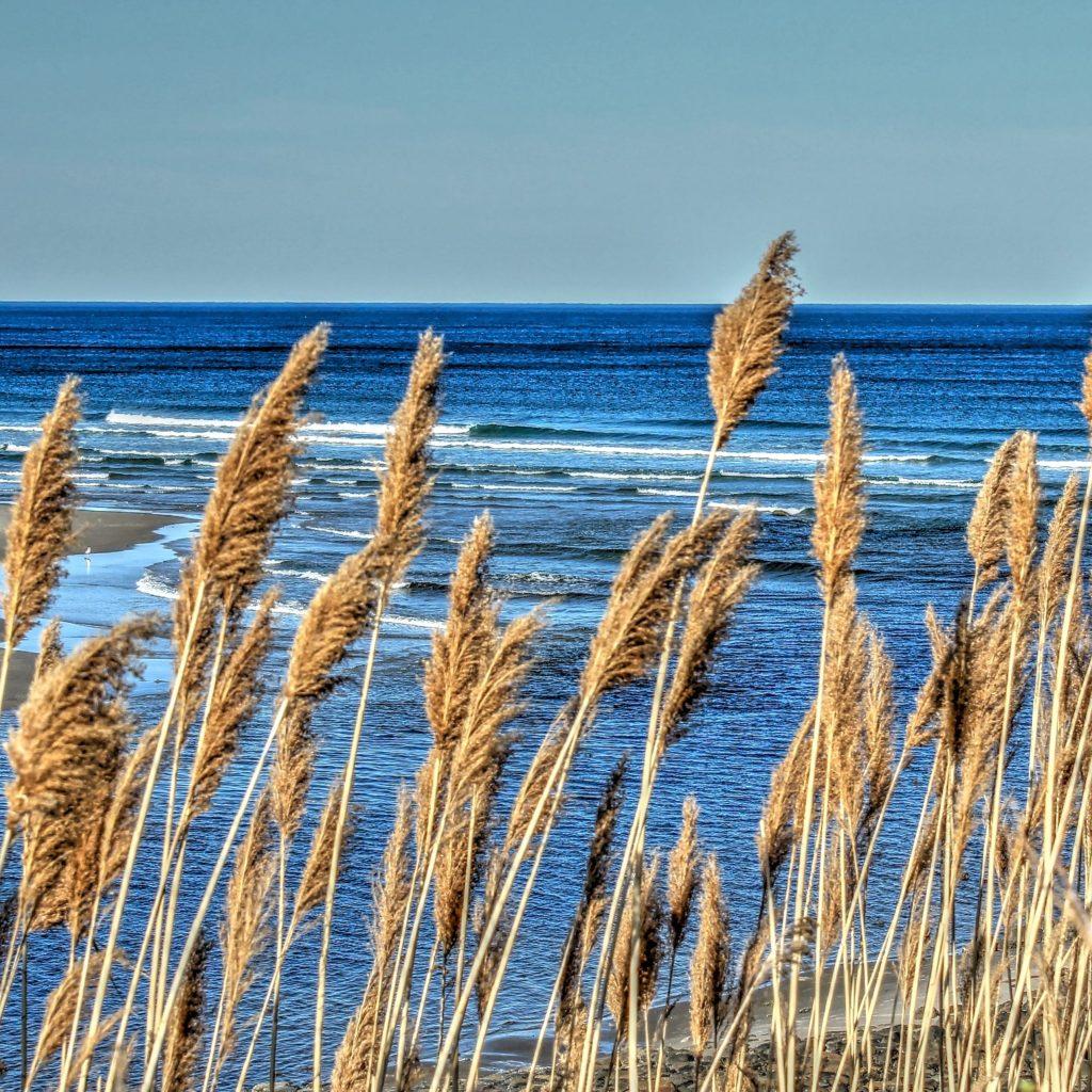 Северный Атлантический океан, побережье штата Мэйн, США