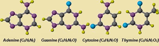 азотистые соединения