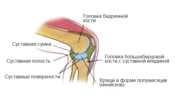 соединение костей схема