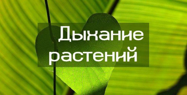 Чем дышат растения и как дышат растения