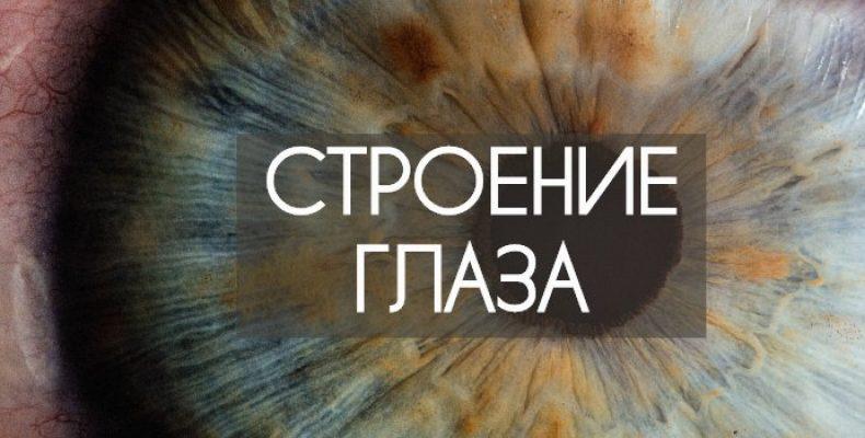 Строение глаза человека со схемой и подробным описанием