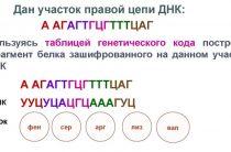 Задачи ЕГЭ по кодированию генетического кода